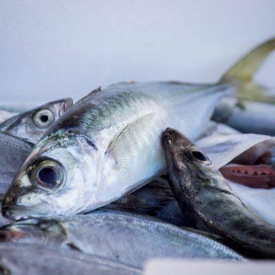 Pesce adriatico 2